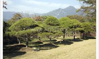 양평수목장